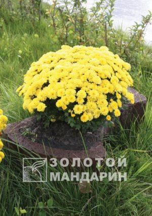 flower (11)-600×852
